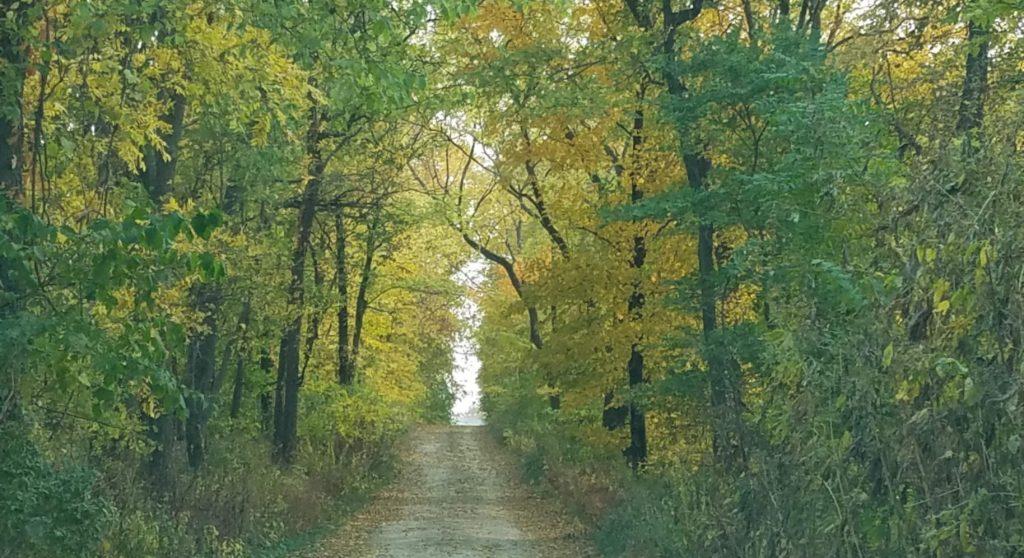 tree covered gravel lane