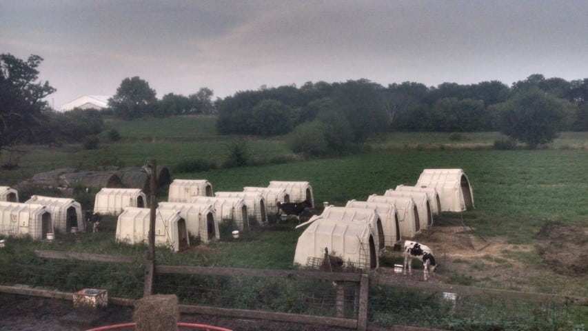 Calf Hutches in the Valley