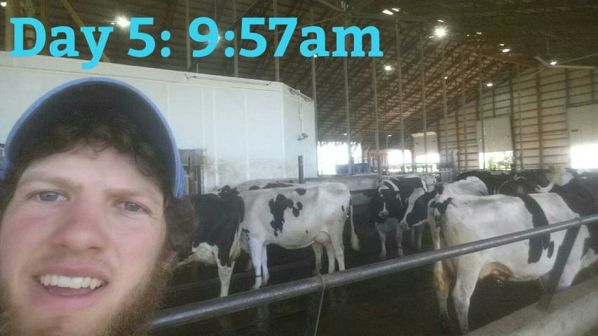 #DairymanDan with the cows