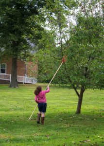 girl picking apples with an apple picker