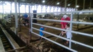 man and two children scraping manure from an alleyway in a dairy barn