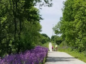 3 bikes on a bike trail with purple flowers and trees along the edges