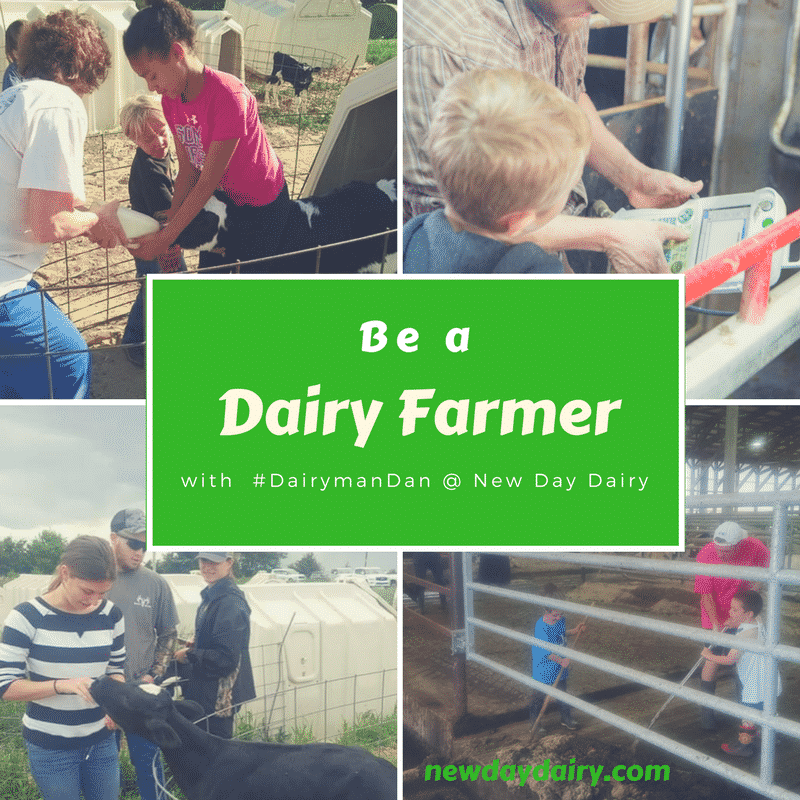 Be A Dairy Farmer Challenge