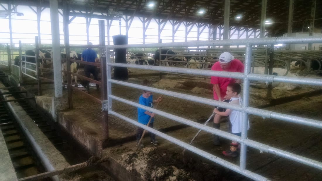 Scraping Manure in the Barn